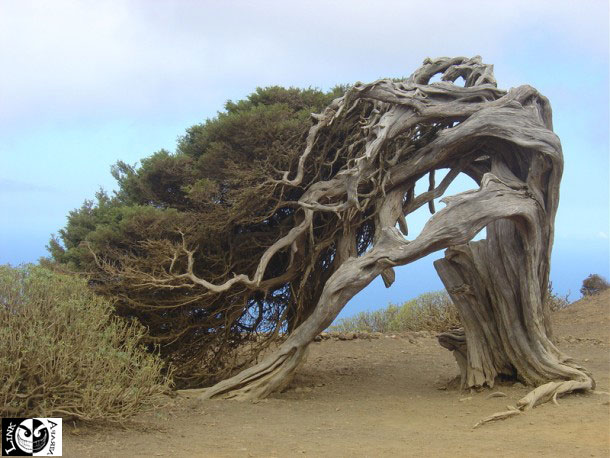 دنیای شگفت درختان/تصویری
