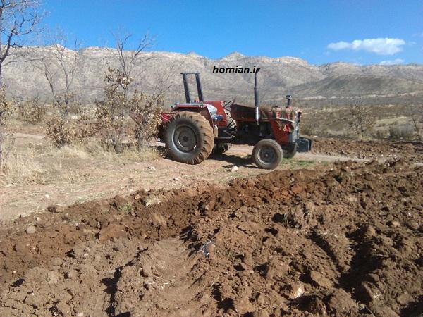 گزارش تصویری از غارت مراتع شمال کوهدشت / مرتع خواری در روز روشن و دست روی دست مسئولان